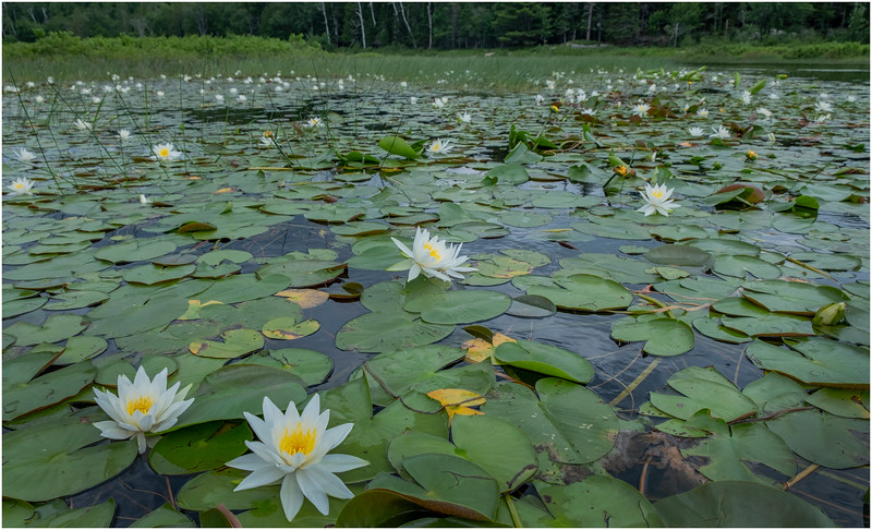 Adirondacks Big Brook 9 July 2019