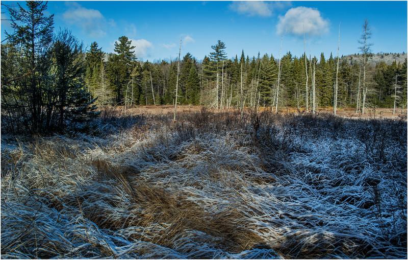 Adirondacks Long Lake November 2015 Wetlands at Sabattis Road 3