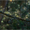 Adirondacks Long Lake Tree Moss September 25 2016