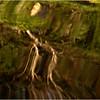 Adirondacks Cedar River Flow September 2012 Reflection2