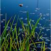 Adirondacks Lake Durant Swamp 3 September 25 2016
