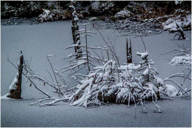 Adirondacks Long Lake Roadside Pond 1 December 2016