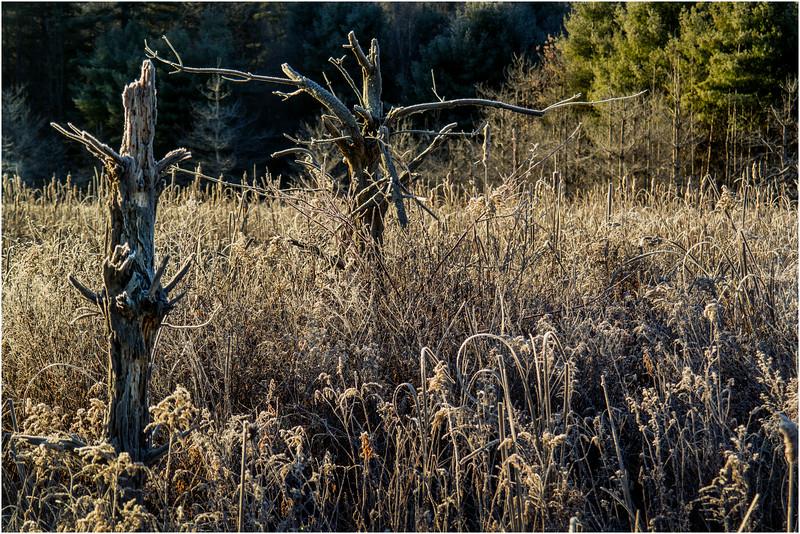 Adirondacks North Creek November 2015 Austin Pond Morning Frost 4