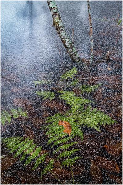 Adirondacks Lake Abenakee 11 December 2016