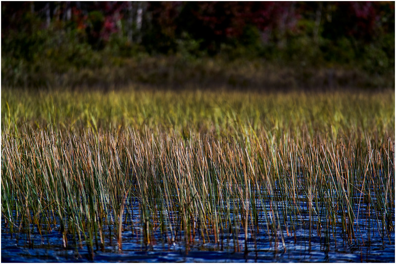 Adirondacks Cedar River Flow Reeds 1 September 24 2016