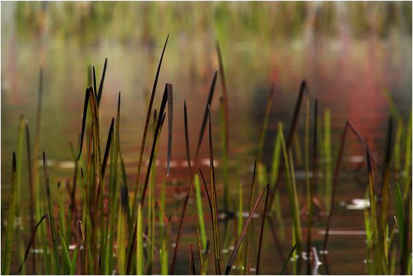Adirondacks Cedar River Flow September 2015  Reeds 7
