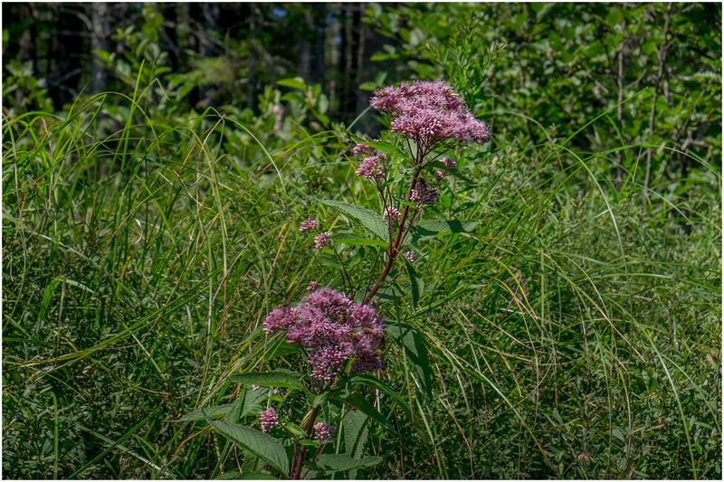 Adirondacks Forked Lake Inlet Shoreline 4 July 2017