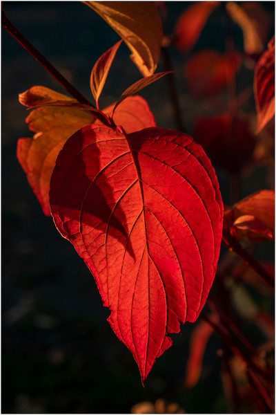 Adirondacks Forked Lake Leaves 8 October 2019