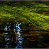 Adirondacks North Branch Moose River Grasses 56 July 2016
