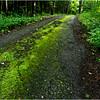 Adirondacks Buck Horn Way, Merrill NY Chateaugay Lake July 2013