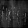 Adirondacks Cedar River Flow Reeds and Reflection 2 October 2012