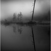 Adirondacks Forked Lake North Bay Inlet Before Sunrise Mist Tree July 2011