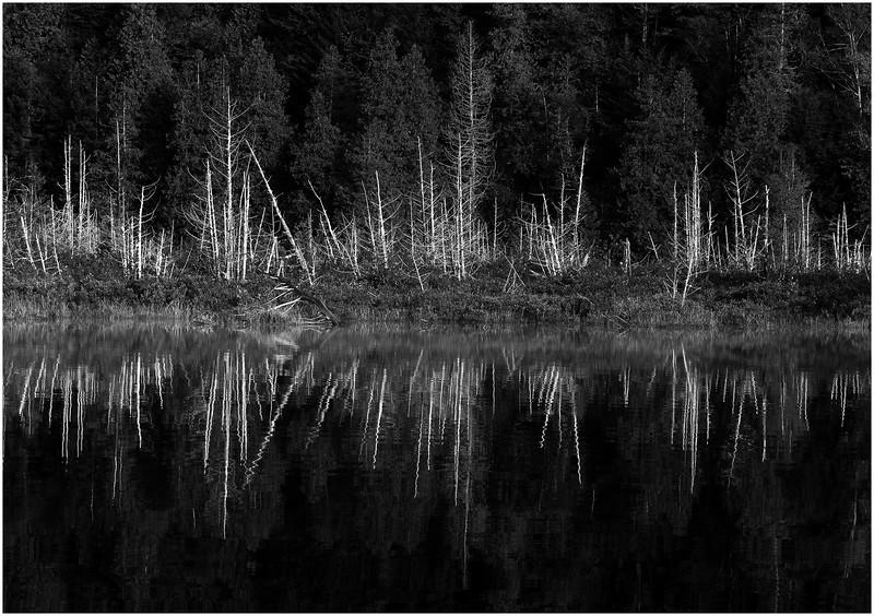 Adirondacks Henderson Lake September 2010 Mist Shore Dead Trees2