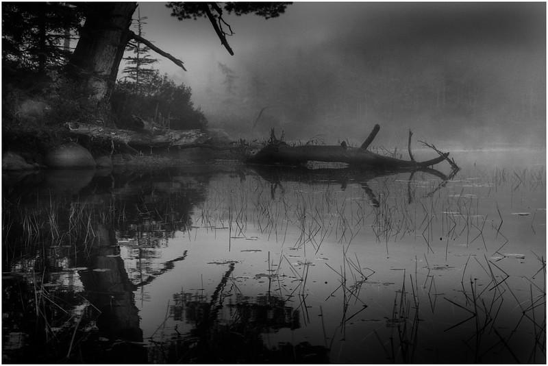 Adirondacks Whitney Wilderness Round Lake Misty Shore With Tree and Deadfall September 2013