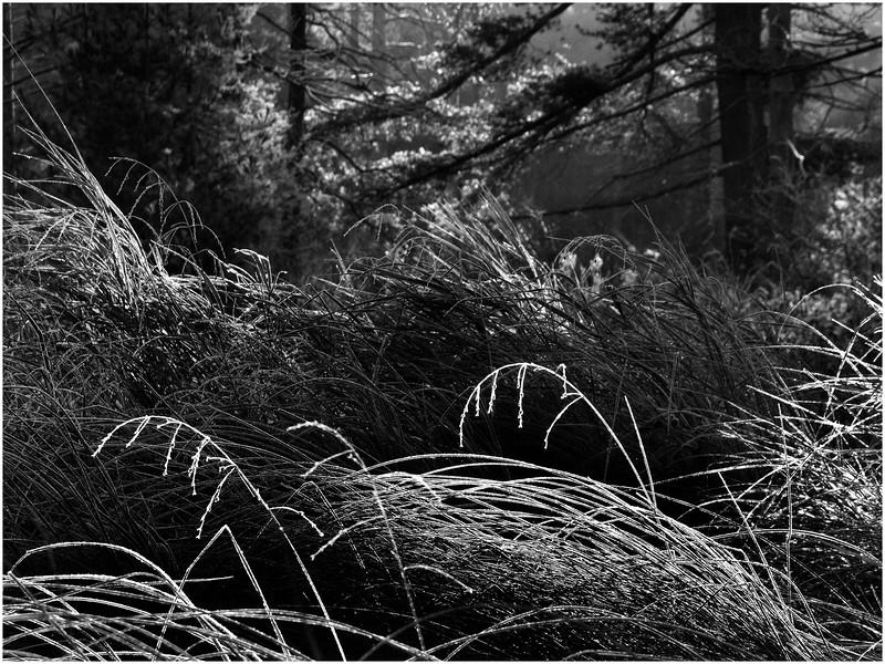 Adirondacks Bog River Shoreline Fall Foloage Grasses5  October 2011
