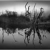 Adirondacks Whitney Wilderness Round Lake Swampy Misty Shore X Deadfall September 2013