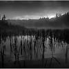 Adirondacks Cedar River Flow Before Sunrise with Reeds September 2013