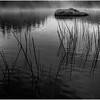 Adirondacks Cedar River Flow Morning Mist Rock Reeds and Shore 3 September 2013