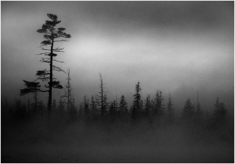 Adirondacks Whitney Wilderness Round Lake Reach Shoreline in Heavy Mist 4 October 2011