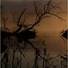 Adirondacks Forked Lake July 2015 Morning Mist Deadfall 2