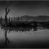 Adirondacks Forked Lake July 2015 Morning Mist Emerging Swamp Shore 5