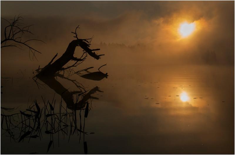Adirondacks Forked Lake July 2015 Morning Mist Deadfall at Sunrise