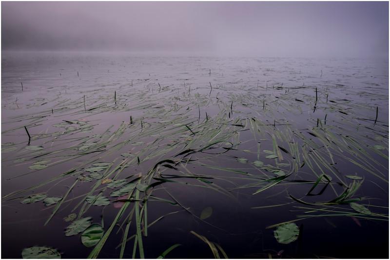 Adirondacks Newcomb Lake Grasses and Lilypads July 2017