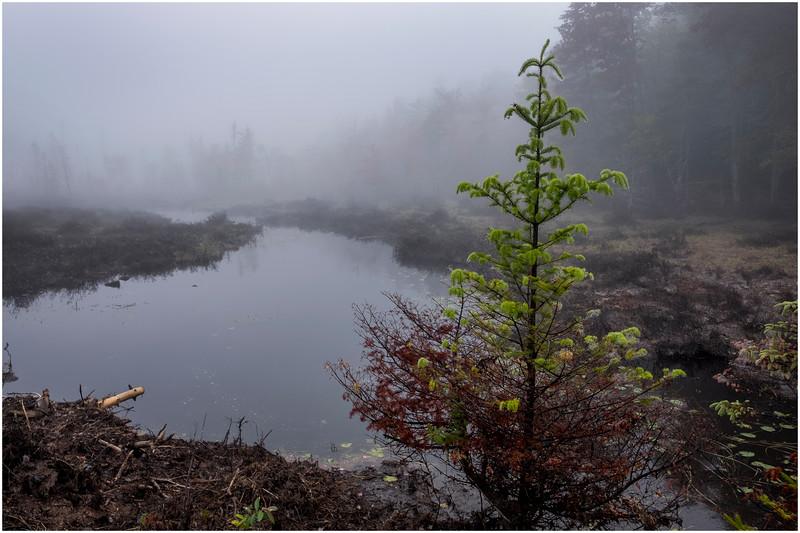 Adirondacks Cary Lake Morning Mist 11 September 2017