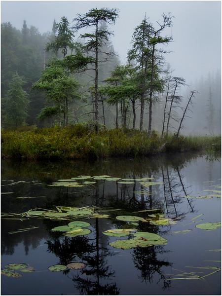 Adirondacks St Regis Pink Pond Shoreline in Mist 4 July 2009