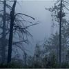 Adirondacks Forked Lake July 2015 Morning Mist Emerging Swamp Shore Treeline 2