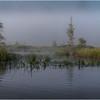 Adirondacks Forked Lake July 2015 Morning Mist Emerging Swamp Shore 1