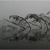 Adirondacks Raquette lake August 2008 Mist Deadfall
