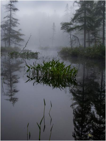 Adirondacks Ste Regis Morning Mist Passage from Long Pond to Pink Pond 4 July 2009