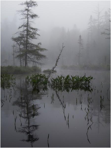 Adirondacks Ste Regis Morning Mist Passage from Long Pond to Pink Pond 5 July 2009