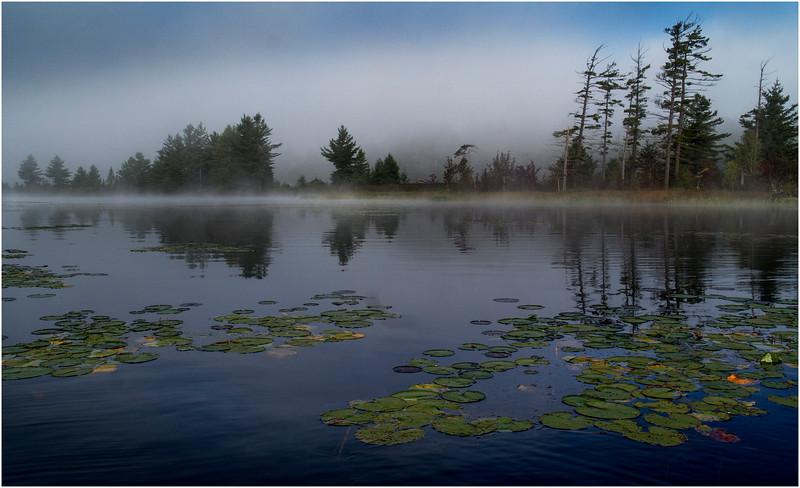 Adirondacks Bog River Morning Mist Emerging Shoreline Lilypads 2 August 2013