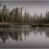 Adirondacks Bog River Morning Mist Swampy Shoreline August 2013