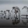 Adirondacks Raquette lake August 2008 Mist Deadfall 2