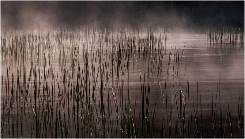 Adirondacks Raquette Lake August 2008 Mist Reeds4