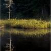 Adirondacks Forked Lake July 2015 Morning Mist Sunlit Tree and Shoreline
