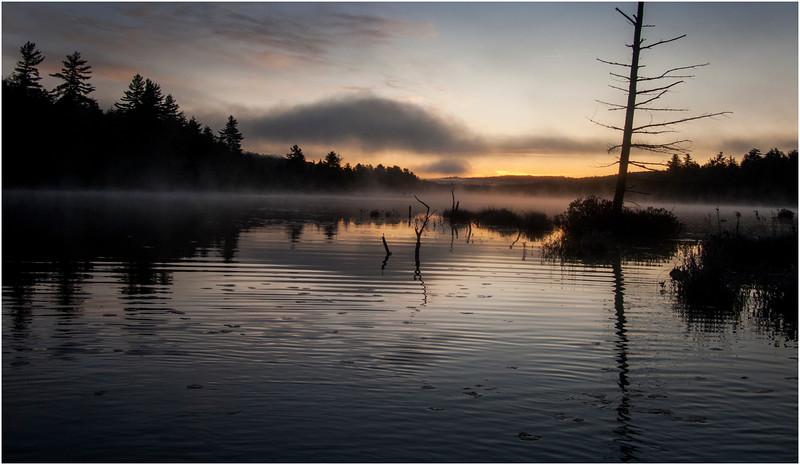 Adirondacks Utowana Lake Before Sunrise with Tree October 2009