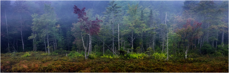 Adirondacks Cary Lake Morning Mist 32 September 2017