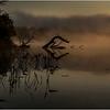 Adirondacks Forked Lake July 2015 Morning Mist Deadfall on Shore