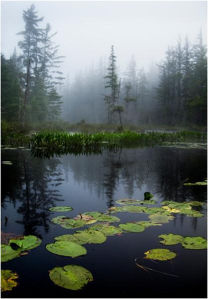 Adirondacks St Regis Long Pond Shoreline in Mist 8 July 2009