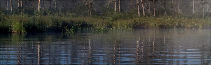 Adirondacks Forked Lake July 2015 Morning Mist Emerging Swamp Shore 3