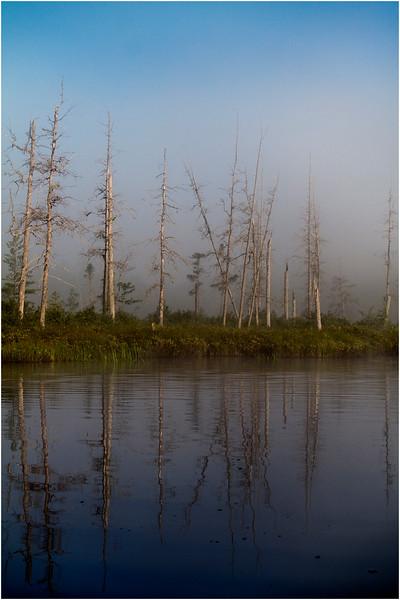Adirondacks Forked Lake July 2015 Morning Mist Emerging Swamp Shore 2