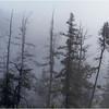 Adirondacks Forked Lake July 2015 Morning Mist Emerging Swamp Shore Treeline 1