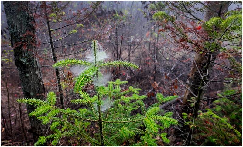 Adirondacks Cary Lake Morning Mist 4 September 2017