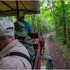 Adirondacks Newcomb Lake Horse Transportation 5 July 2017