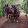 Adirondacks Newcomb Lake Horse Transportation 1 July 2017