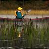 Adirondacks Cedar River Flow September 2015 Rick Rosen Reeds 1